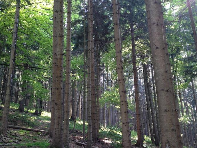 Natur und wir sehen den Wald vor lauter Bäumen nicht